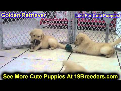 Franklin County Dogs For Sale
