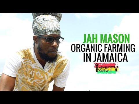 "Jah Mason Interview ""Organic Farming in Jamaica"""