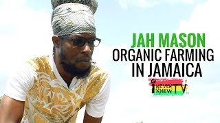 Jah Mason Interview Organic Farming in Jamaica