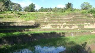 Sri Lanka,ශ්රී ලංකා,Ceylon,Beautiful Rice Paddy Terraces (11)