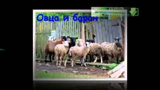 Презентация на тему Домашние животные