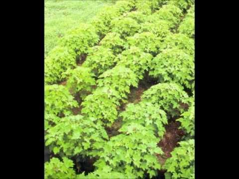 MULTI SIDES AGRI.BUSINESS CALLER S.KORIA DR.ASHRAF SAHIBZADA.wmv