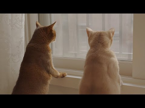 [Tomorrow Today] 고양이가 창밖을 바라보는 이유 - 메가컬쳐