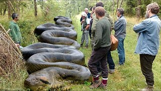 lockdown में मिला दुनिया का सबसे बड़ा एनाकोंडा | Discovery Channel Snakes