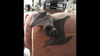 When Someone Says You're The Bat Whisper And You're Definitely Not. lol This Is Just For FUN