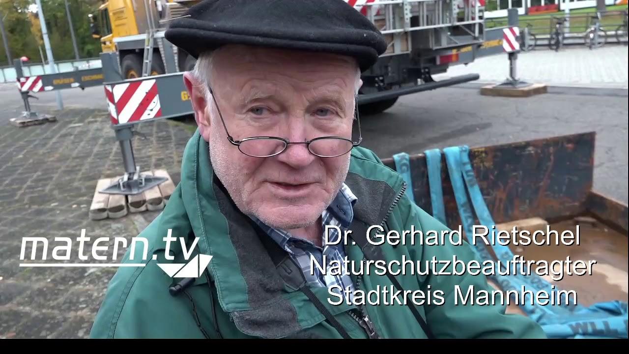 Mannheim: Kampfeinsatz gegen Asiatische Hornisse