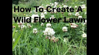 How To Create A Wild Flower Lawn