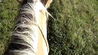 Rando à cheval dans le Jura