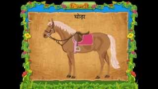 Animals Name In Hindi (Wild & Pet Animals)