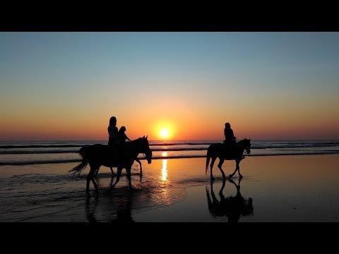 Video Cavalli che corrono liberi con Sottofondo Musicale Strumentale Rilassante e Emozionante!!