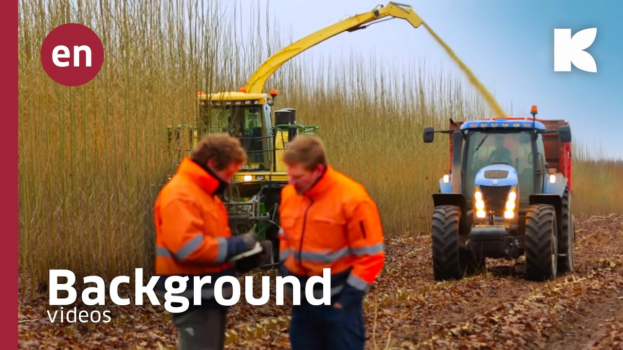 Short-rota­ti­on forestry and wood­land 2016 Video Youtube