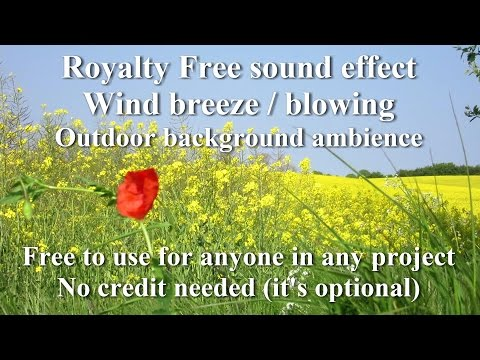 Free Wind Breeze/Blow sound effect  Outdoor background ambience