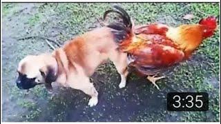 साइंस ने अलग-अलग जानवरों को मिलवा कर यह कारनामा किया है