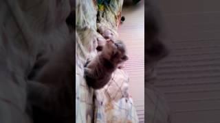Котёнок учится ходить,война у кошек не вошла в видео