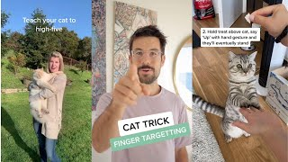 How To Teach Your Cat TRICKS  Easy & Cool Training Tricks