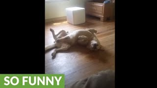 Goofy dog sleeps in very unusual position