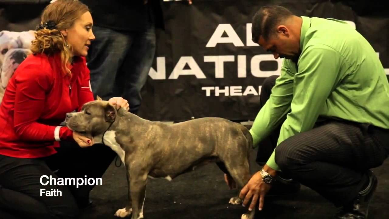 THE BIGGEST AND BEST AMERICAN BULLY SHOW, OVER 200 BULLDOGS FEATURED