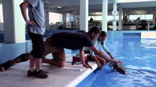 Dolphin Tale - Behind the Scenes Clip
