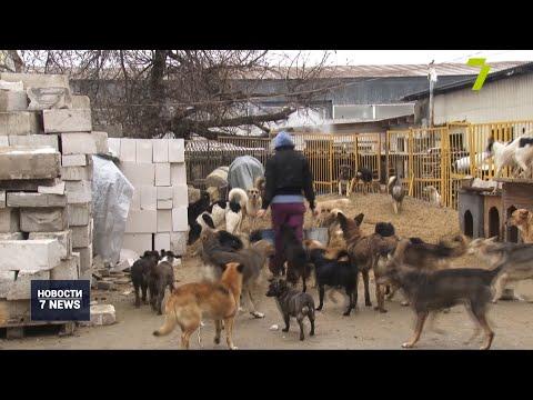Новости 7 канал Одесса: Приют для животных «Ковчег» нуждается в помощи