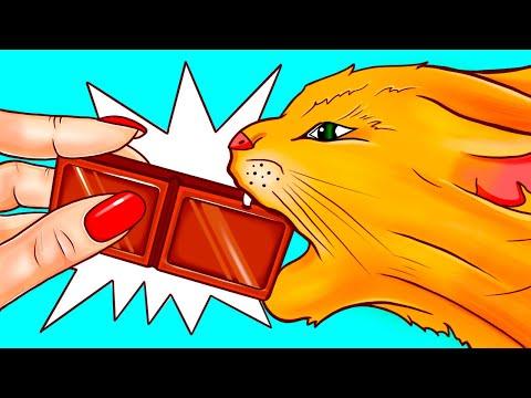 ทำไมแมวและสุนัขไม่ควรกินช็อคโกแลตหรืออาหารบางชนิด