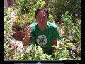 Gardener Sues City of Tulsa For Cutting Down Her Edible Garden