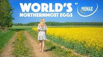 Munax – Maailman pohjoisimmat kananmunat