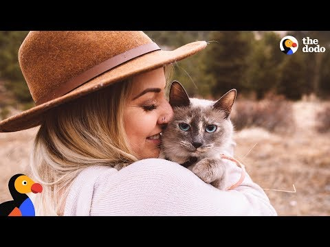 Stray Feral Cat Becomes An Adventure Cat - TUNA | The Dodo