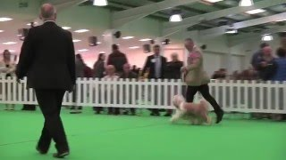 WELKS Dog Show 2016 - Eukanuba Champion Stakes Heat Final - Day 3