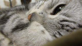 ついに心を開いた猫、魅惑のあったかクッションのトリコ!~しかめっ面で警戒から一転- Cat gets a warmer cushion!
