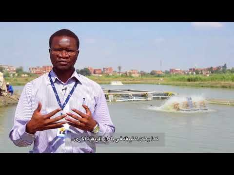 In-pond Raceway System Helps Farmers In Egypt Increase Aquaculture Productivity
