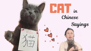 CAT in Chinese Sayings and Proverbs | How to say I'M a CAT PERSON | Fun Chinese Expressions
