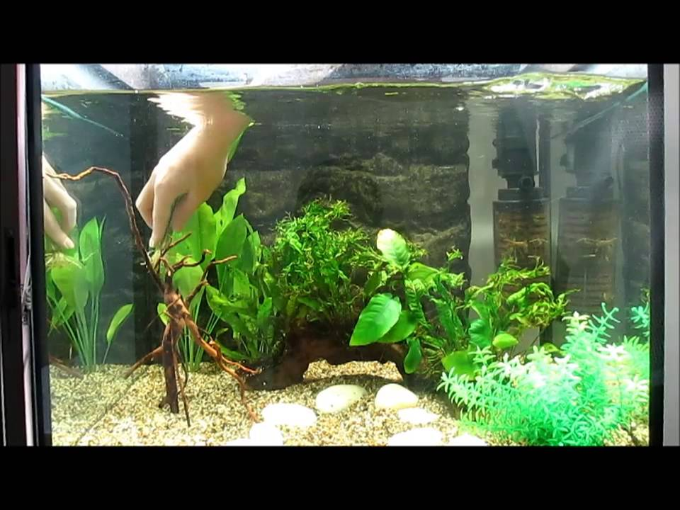 freshwater aquarium design youtube