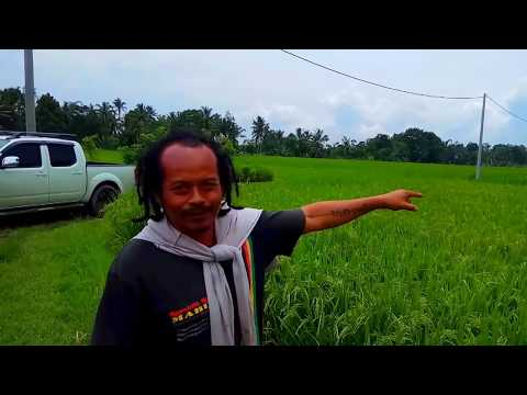 Bali Spice Islands, dragonflies play a critical roll on organic rice farming