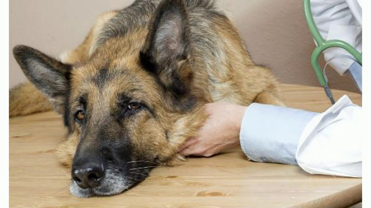 can tramadol cause nausea in dogs