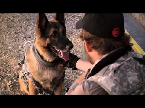 Bark Ops chú chó dũng cảm