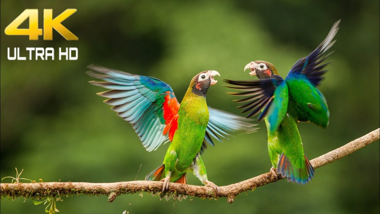 4k Ultra Hd Video For Cute Bird Beautiful Wildlife And Bird Video Birds And Animals In 4k Youtube