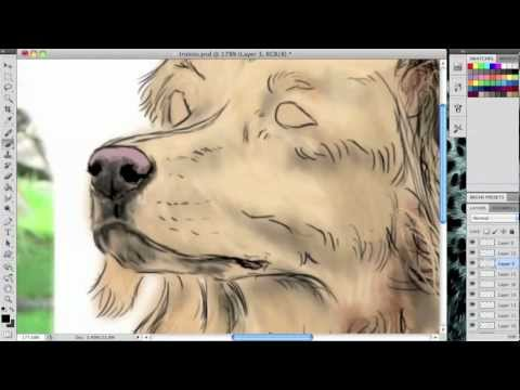 Speed Painting Dog Breeds: Nova Scotia Duck Tolling Retriever
