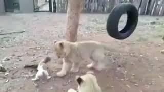 Funny animals$$$$