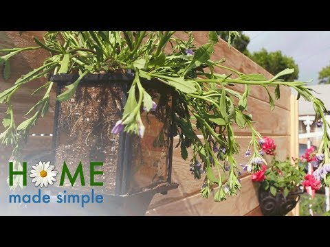 Dress Up a Small Outdoor Space with DIY Wall Sconce Planters | Home Made Simple | OWN
