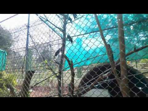 Gadag zoo