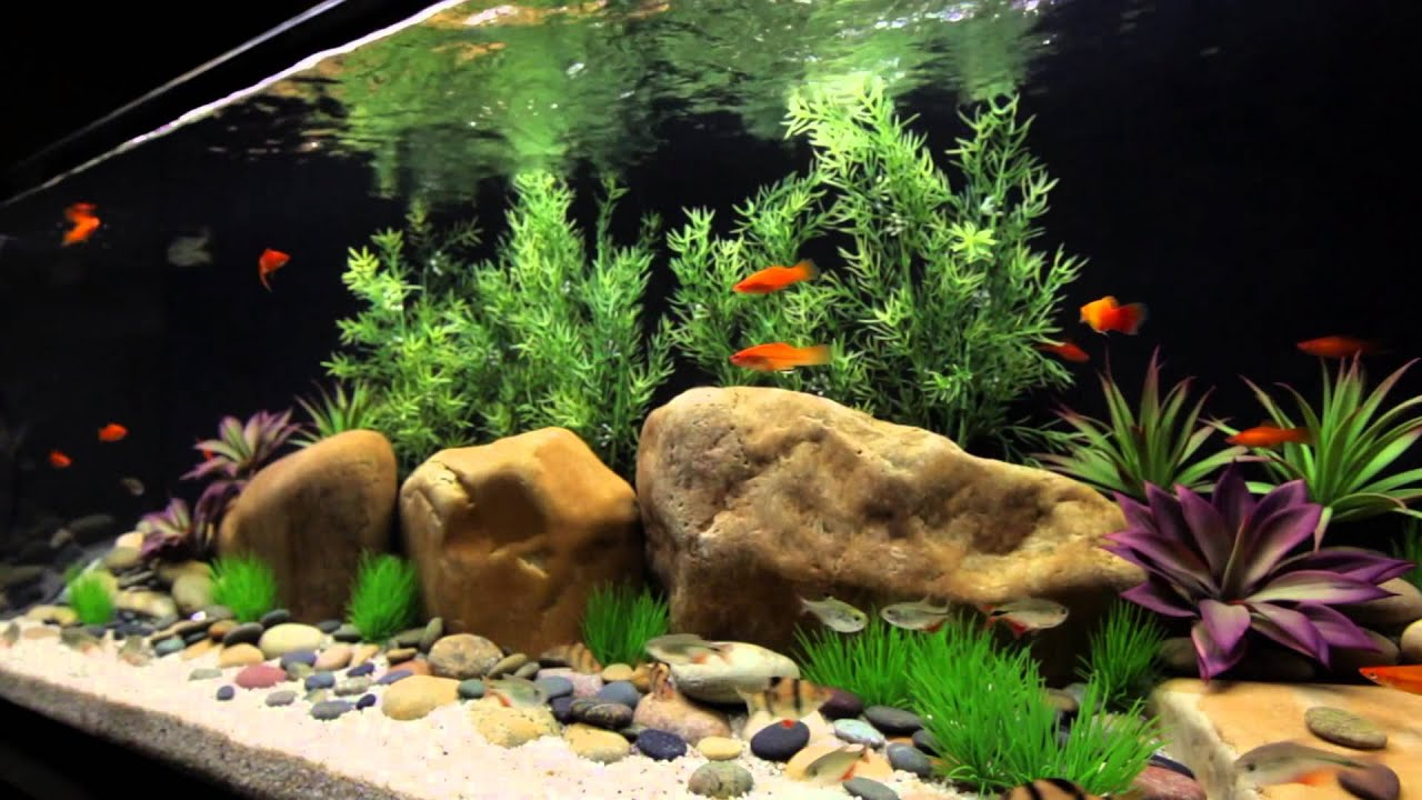 Satellite Freshwater LED+ Aquarium Light Fixture with ...Fresh Water Aquarium Gold Fish Images