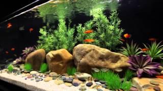 Satellite Freshwater Led+ Aquarium Light Fixture With Wireless Control