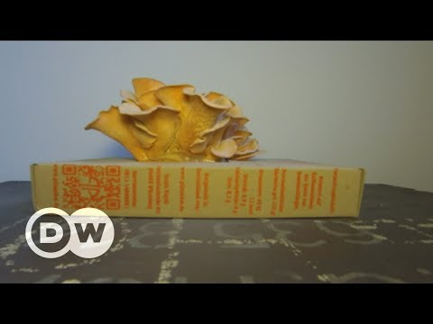 Doing Your Bit: Growing mushrooms in coffee grounds | DW English
