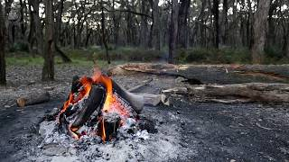 🎧 Camping In The Forest Ambience - 8 Hours Nature Sounds Of Birds Singing & Crackling Campfire Sound