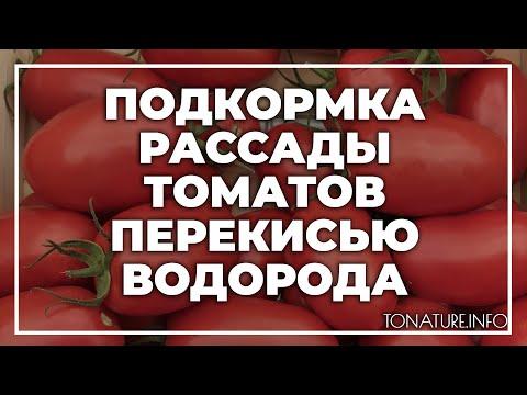 Подкормка рассады томатов перекисью водорода | toNature.Info