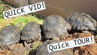 Quick Tour and update. (Mt. tortoises, Leopards, Box turtles! )