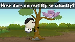 How does an owl fly so silently? | Smart Learning for All