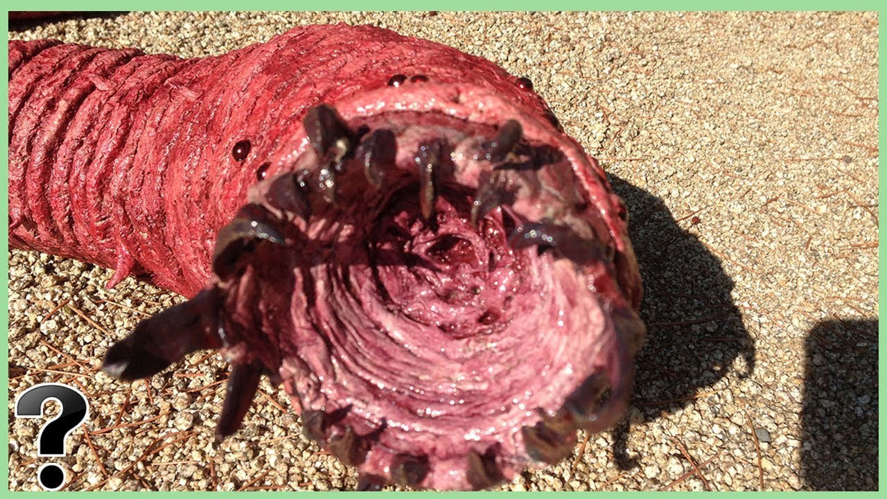 Download What If The Mongolian Death Worm Was Real?