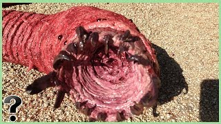 What If The Mongolian Death Worm Was Real?