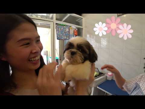 v-l-o-g-#6-|-first-experience-adopting-new-puppy-at-home!!!-puppy-day-1-at-home
